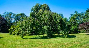 Videóbankos számlanyitásért egy fát ültet a nevedben a MagnetBank